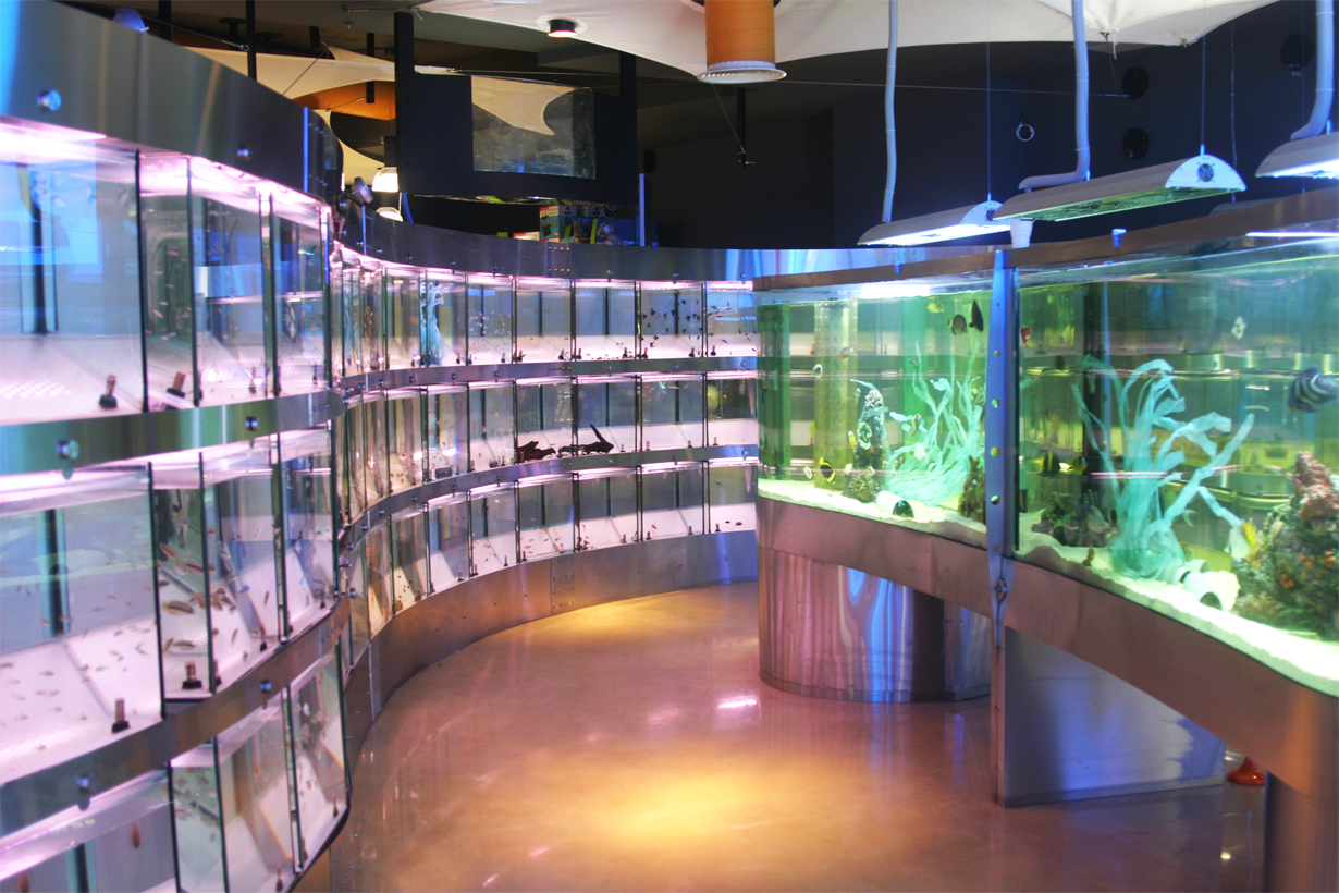 Kelyphos aquarium shop for Tropical fish shop